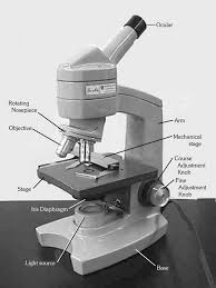 Parts Of A Compound Light Microscope Introduction