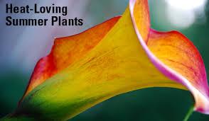 heat loving plants garden heat loving summer plants carycitizen