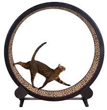 amazon com one fast cat exercise wheel black pet supplies