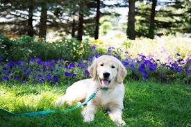 common plants in your home that are harmful to your dog the u0027how