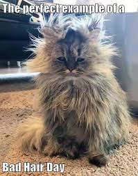 Bad Hair Day Meme - the perfect exle of a bad hair day lolcats lol cat memes