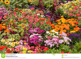 flower bed stock image image 35685091