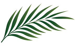 palm leaves for palm sunday palm sunday leaf clipart kid clipartix