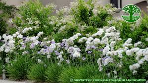 what are the plants with white flowers right next to the society