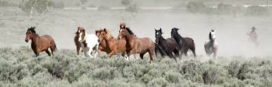 mustang horse refuge for mustangs deluxe sanctuary for vacationers cnn travel