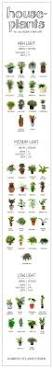 12 best ferns for container gardens images on pinterest ferns