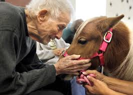 Eye Care Center Cary Nc Barnes And Noble 111 Best Therapy Animals Images On Pinterest Mini Horses