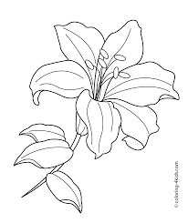 lilium flower coloring pages for kids printable free drawing
