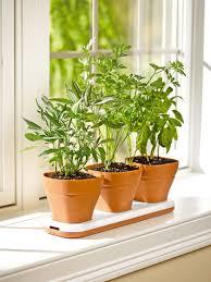 garden ideas small indoor herb garden image indoor herb