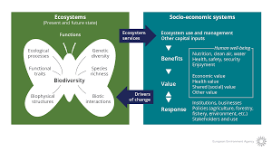 natural capital and ecosystem services u2014 european environment agency