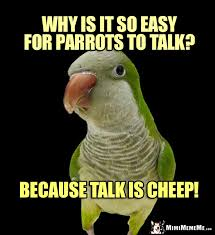 Quaker Memes - quaker parrot asks why is it so easy for parrots to talk because