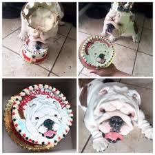 my best friend specialty pet bakery 83 photos u0026 41 reviews pet