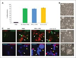 basal like breast cancer cells induce phenotypic and genomic