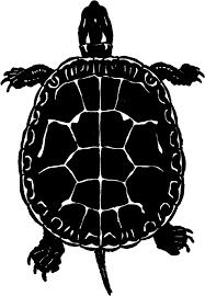 25 turtle images ideas blue ninja turtle