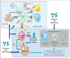 an update on dendritic cell based cancer immunotherapy omics