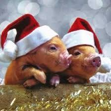 8 best in santa hats images on pinterest animals merry