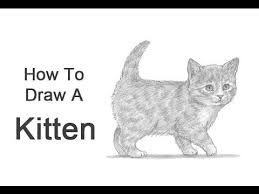 how to draw a kitten youtube