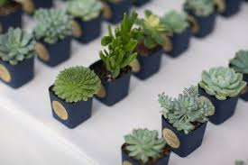 wedding favor ideas succulent wedding favors ideas