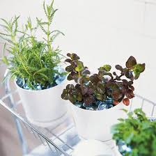 Diy Herb Garden 24 Diy Herb Gardens To Practice Your Green Thumb With