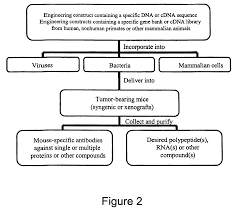 patent us7662398 microorganisms for therapy google patentsuche