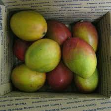 fruit delivered to your door mango mangifera indica live seeds plants and fresh fruit shipped