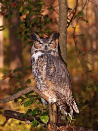 owl free stock photo an owl sitting on a tree branch 14076