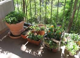 potted vegetable garden for beginners patio vegetable gardening