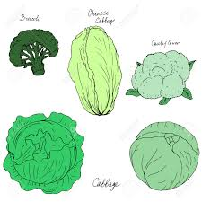 different kind of cabbage broccoli cauliflower and chinese