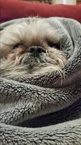 Bug Na Rug 86 Best Na Na Na Booboo Images On Pinterest Animals Funny