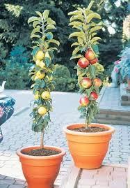 Indoor Garden Containers - 556 best garden container raised images on pinterest gardening