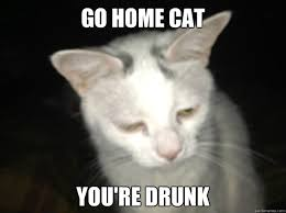 Drunk Cat Meme - go home cat you re drunk drunk cat meme quickmeme