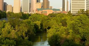 tree service houston great shade trees for the houston heat part iii