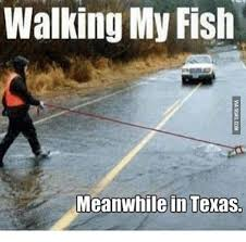 Meanwhile In Texas Meme - walking my fish meanwhile in texas my fish meme on me me
