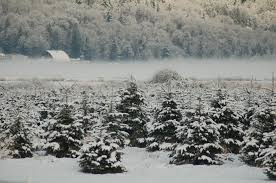 snow valley christmas tree farm home