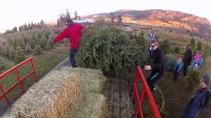 woodward christmas tree farm youtube