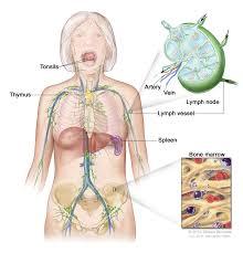 Female Anatomy Organs Women Back Body Parts Stock Photo Woman Women Female Anatomical