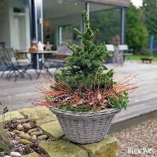topfpflanzen balkon bepflanzungen für balkon und terrasse im winter decko z