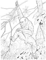 free monkey coloring pages coloring
