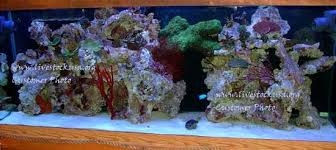 Live Rock Aquascaping Live Rock Overview Saltwater Aquarium Live Rock Manado Fiji