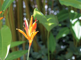 List Of Tropical Plants Names - tour the exotic hawaiian tropical gargen hgtv