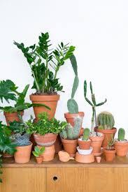 123 best indoor jungle images on pinterest plants indoor plants