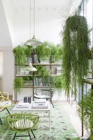 a luminous victorian home filled with plants in london victorian