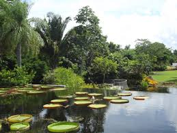 Naples Botanical Gardens Coupons Lovely Naples Botanical Gardens Coupons Homelivingdecor