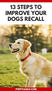 13 simple steps to improve your dogs recall puppy leaks