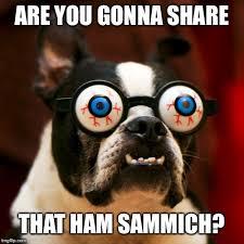 Boston Terrier Meme - boston terrier 165 memes imgflip