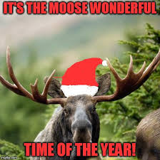Moose Meme - moose memes imgflip