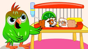 birds family guinea pigs runaway love story episodes cartoon
