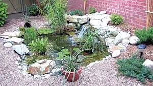 Garden Pond Fish Types Mini Ponds A Pond In A Pot Why Not U2014 Saturday Magazine U2014 The