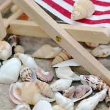 Where To Buy Seashells Large Sea Shells Ebay
