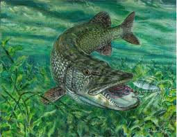 64 best wall murals and borders images on pinterest wall murals northern pike attacks on weed edge